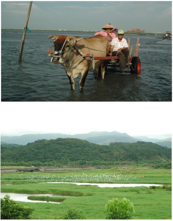 來臺專題採訪濕地保育